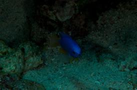 blauerfisch-15b35d1