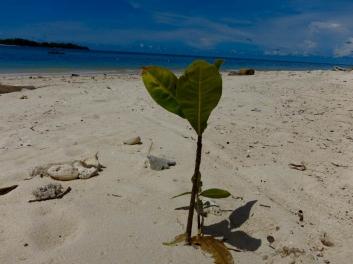 Gangga Island -7