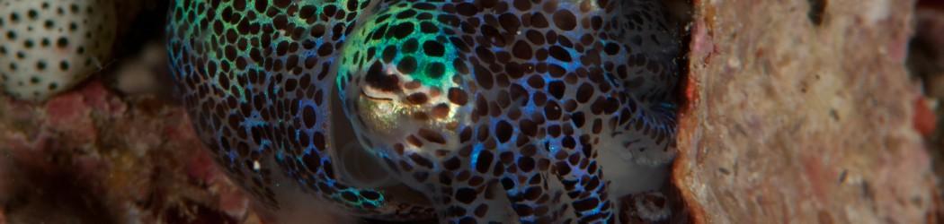 2012 Featured Tintenfische