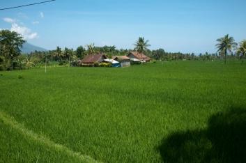 bali-2009-11
