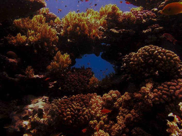 2007 Aegypten Lahami Bay, Riffdach an Boye 5